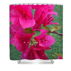 Bougainvillea Dream #2 Shower Curtain by Robert ONeil