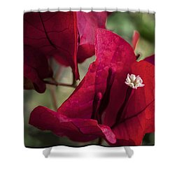 Shower Curtain featuring the photograph Bougainvillea by Steven Sparks