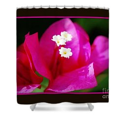 Shower Curtain featuring the photograph Bougainvillea Within A Border by Leanne Seymour