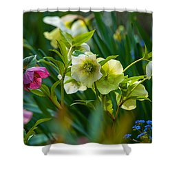 Shower Curtain featuring the photograph Bouquet Of Lenten Roses by Jordan Blackstone