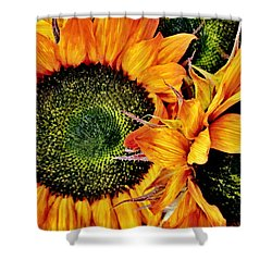 Bouquet Of Sunflowers Shower Curtain by Danielle  Parent