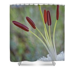 Bouquet On Bokeh Shower Curtain