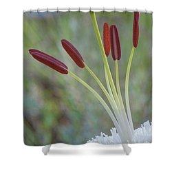 Bouquet On Bokeh Shower Curtain by Jean-Pierre Ducondi