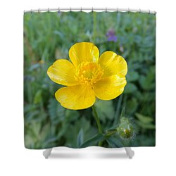 Bouton D'or Shower Curtain by Marc Philippe Joly