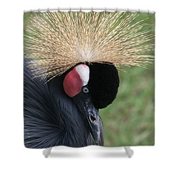 Bow Your Head Shower Curtain by Judy Whitton