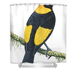 Bowerbird  Shower Curtain by Anonymous