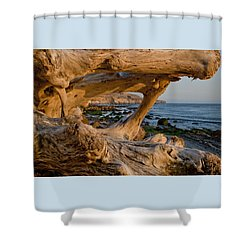 Bowling Ball Beach Framed In Driftwood Shower Curtain by Patricia Sanders
