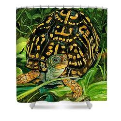 Box Turtle Shower Curtain