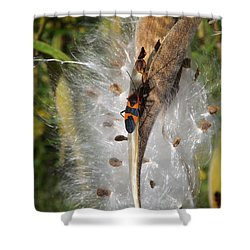 Boxelder On Butterfly Milkweed 2 Shower Curtain