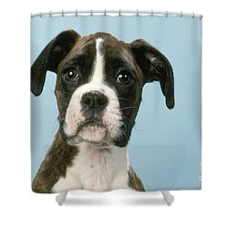 Boxer Dog, Close-up Of Head Shower Curtain by John Daniels