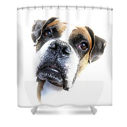 Boxer Expression Shower Curtain by Susan Leggett