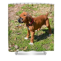 Boxer Puppy 2 Shower Curtain by Maria Urso