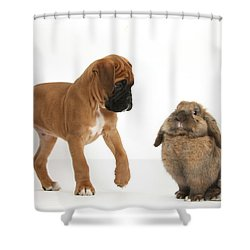 Boxer Puppy With Lionhead-lop Rabbit Shower Curtain by Mark Taylor