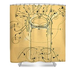 Brain Vestibular Sensor Connections By Cajal 1899 Shower Curtain