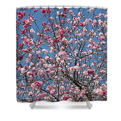 Branches And Blossoms Shower Curtain by Carol Groenen