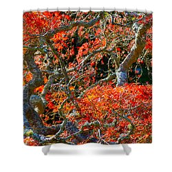 Shower Curtain featuring the photograph Branches Of Color by Cathy Dee Janes