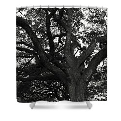 Branches Of Life Shower Curtain by Andrea Anderegg