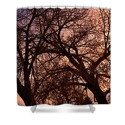 Branching Out At Sunset Shower Curtain by James BO  Insogna