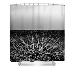Shower Curtain featuring the photograph Branching Out by Brian Duram