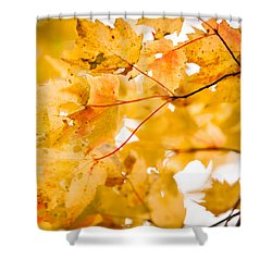 Branching Yellow Shower Curtain by Melinda Ledsome