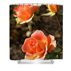 Brass Band Roses In Autumn Shower Curtain by Living Color Photography Lorraine Lynch