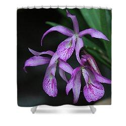 Brassanthe Maikai Orchid Shower Curtain