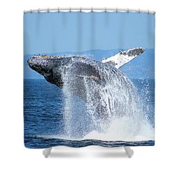Breaching Humpback Shower Curtain