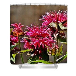 Shower Curtain featuring the photograph Breakfast At The Bee Balm by VLee Watson