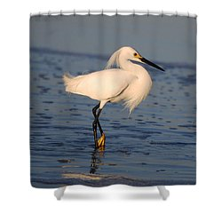 Breakfast Companion Shower Curtain by Linda Mesibov