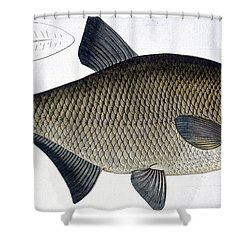 Bream Shower Curtain by Andreas Ludwig Kruger