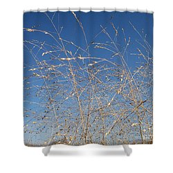 Shower Curtain featuring the photograph Breeze by Sara  Raber