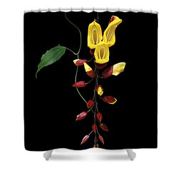 Brick And Butter Vine Shower Curtain by Judy Whitton
