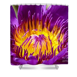 Bright And Bold Shower Curtain by Sabrina L Ryan
