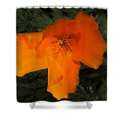 Bright California Poppy Shower Curtain by Phyllis Denton