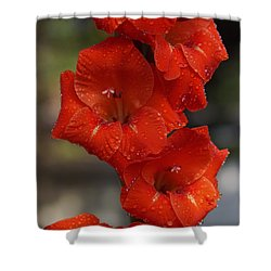 Bright Glad Shower Curtain by Kim Pate