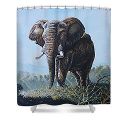Bright Morning Shower Curtain