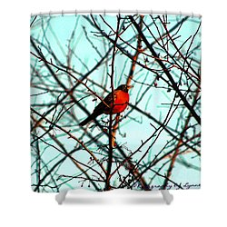 Bright Red Robin Shower Curtain