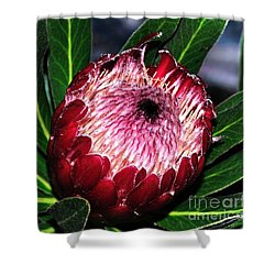 Bright'n'happy Protea Shower Curtain by Kaye Menner