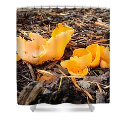 Shower Curtain featuring the photograph Brilliance In Orange by Cheryl Hoyle