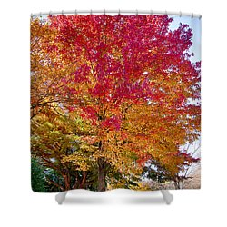 brilliant autumn colors on a Marblehead street Shower Curtain