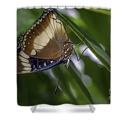 Brilliant Butterfly Shower Curtain by Ray Warren