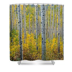 Shower Curtain featuring the photograph Brilliant Colors Of The Autumn Aspen Forest by Cascade Colors
