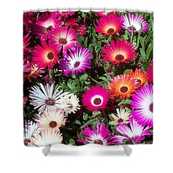Shower Curtain featuring the photograph Brilliant Flowers by Chalet Roome-Rigdon