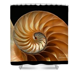 Brilliant Nautilus Shower Curtain