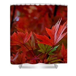 Brilliant Red Maples Shower Curtain by Linda Unger