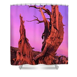 Shower Curtain featuring the photograph Bristlecone Pine At Sunset White Mountains Californa by Dave Welling
