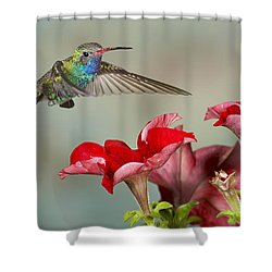 Broad Billed Hummingbird 4 Shower Curtain