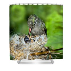 Broad-billed Hummingbird And Young Shower Curtain by Anthony Mercieca
