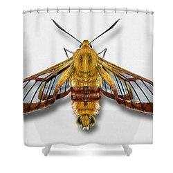 Broad-bordered Bee Hawk Moth Butterfly - Hemaris Fuciformis Naturalistic Painting -nettersheim Eifel Shower Curtain