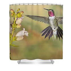 Broad Tailed Hummingbird 2 Shower Curtain